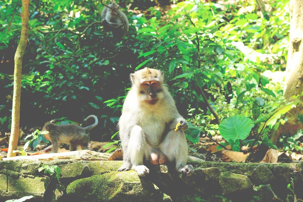 Indonesien_Monkey_Forest