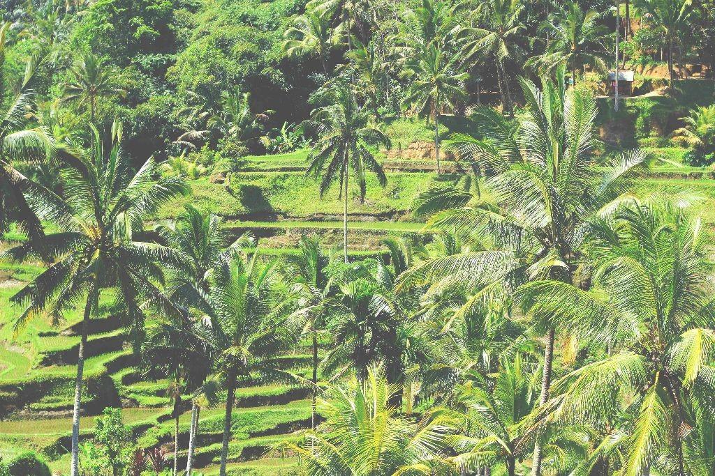 Indonesien_Reisfelder_ Tegalalang