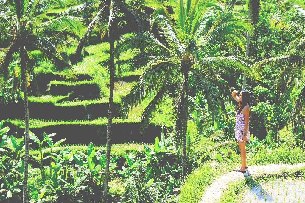 Indonesien_reisfelder
