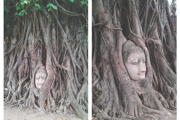 Thailand_Ayutthaya_Buddha_Kopf_Baum