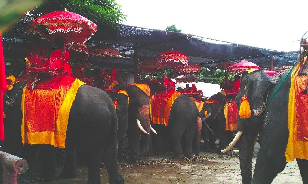 Thailand_Ayutthaya_Elefantenreiten