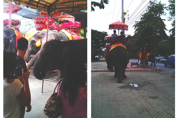 Thailand_Ayutthaya_Elefantenreiten_1