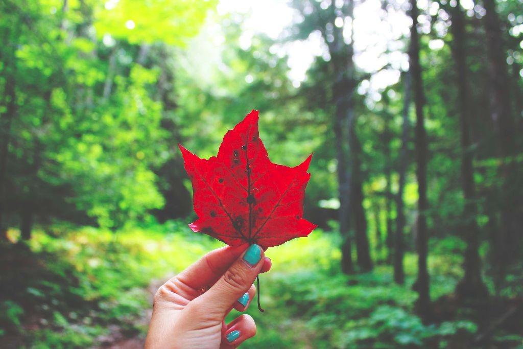Indian_Summer_Killarney_Provincial_Park_Kanada