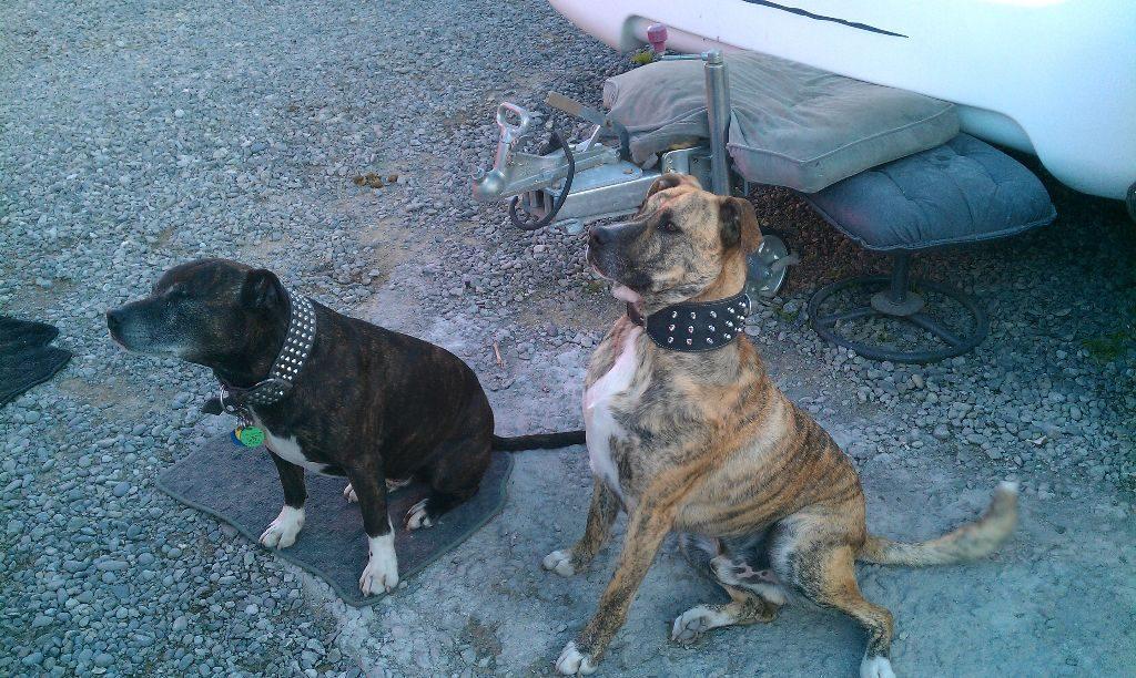 Hunde in Neuseeland
