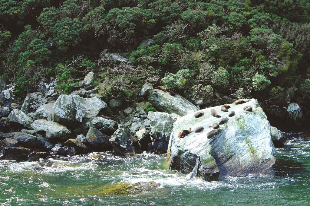 Milford Sound Neuseeland Seal Rock