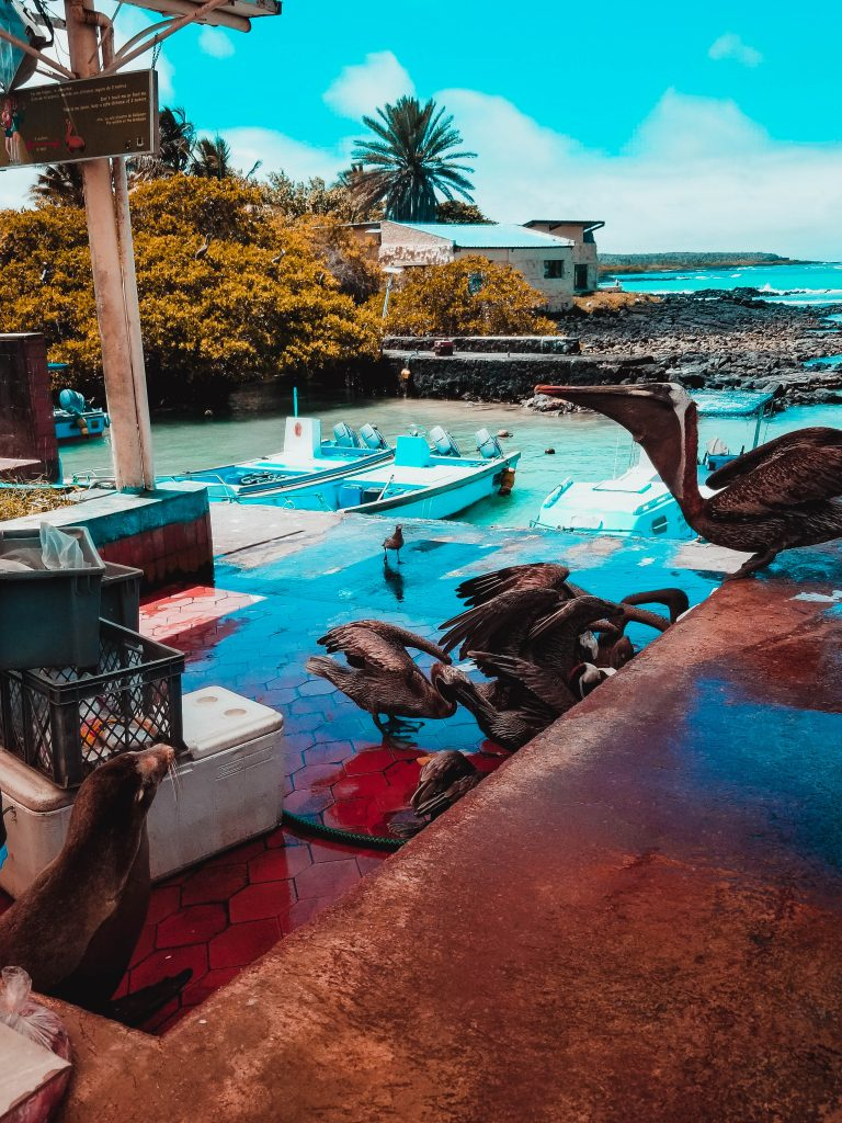 Fischmarkt, Galapagos Insel