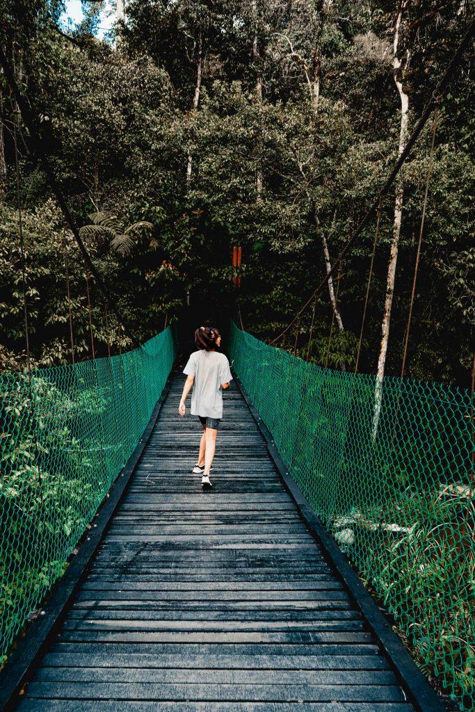 Regenwald Wanderung, Cameron highlands, Malaysia