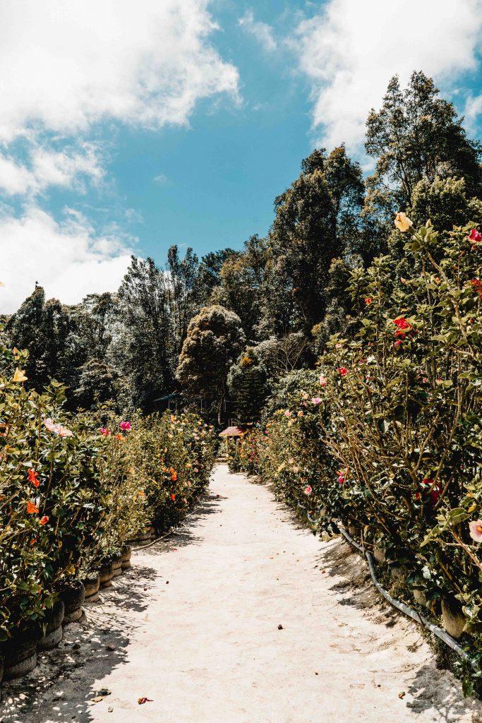 Rose Garden, Tanah Rata, Malaysia