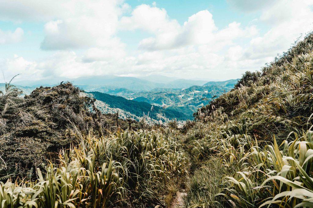 Regenwald Wanderweg, Nummer 10