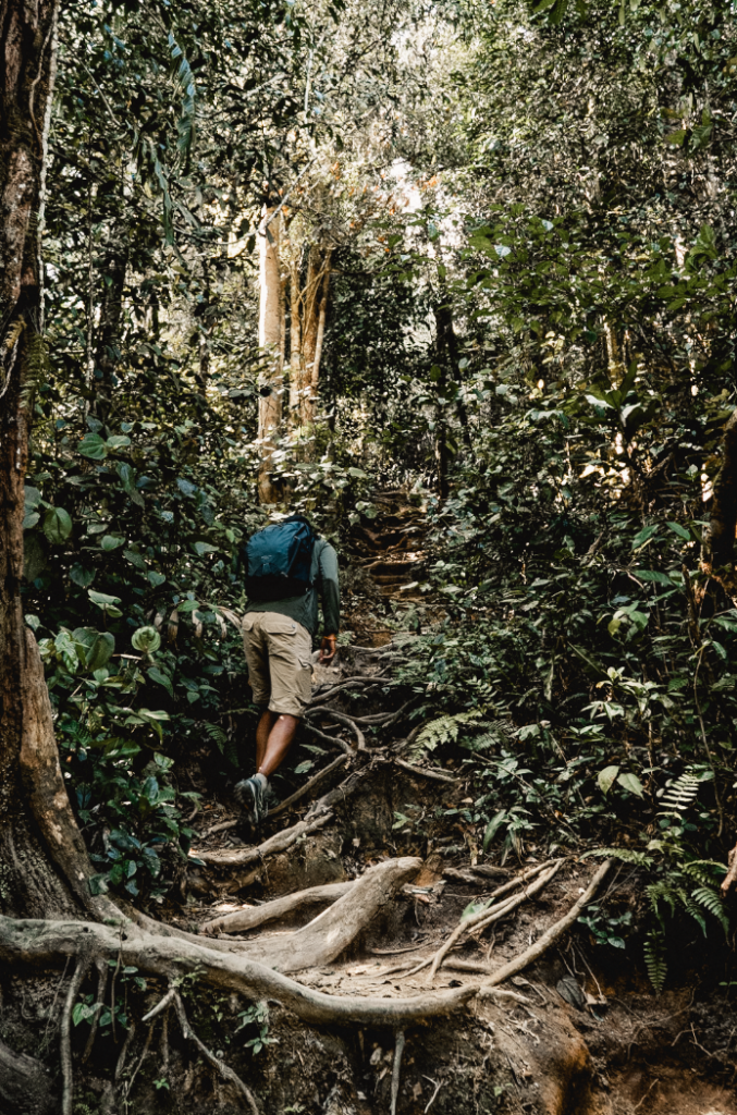 Regenwald Wanderweg, Nummer 10, Malaysia, Cameron Highlands